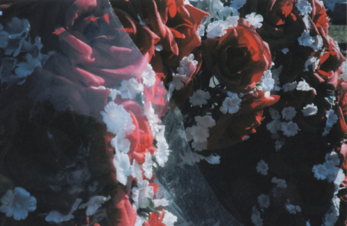 Roses rouges en plastique