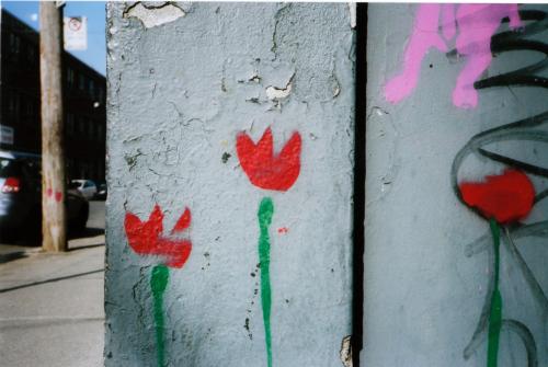 Rouges et roses